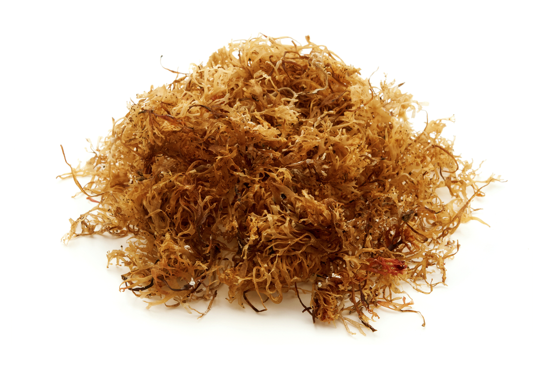Why is Sea Moss the Hottest New Superfood?